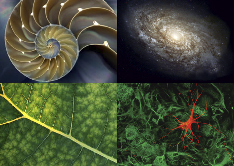 snail shell // milky way // leaf veins // motor neuron